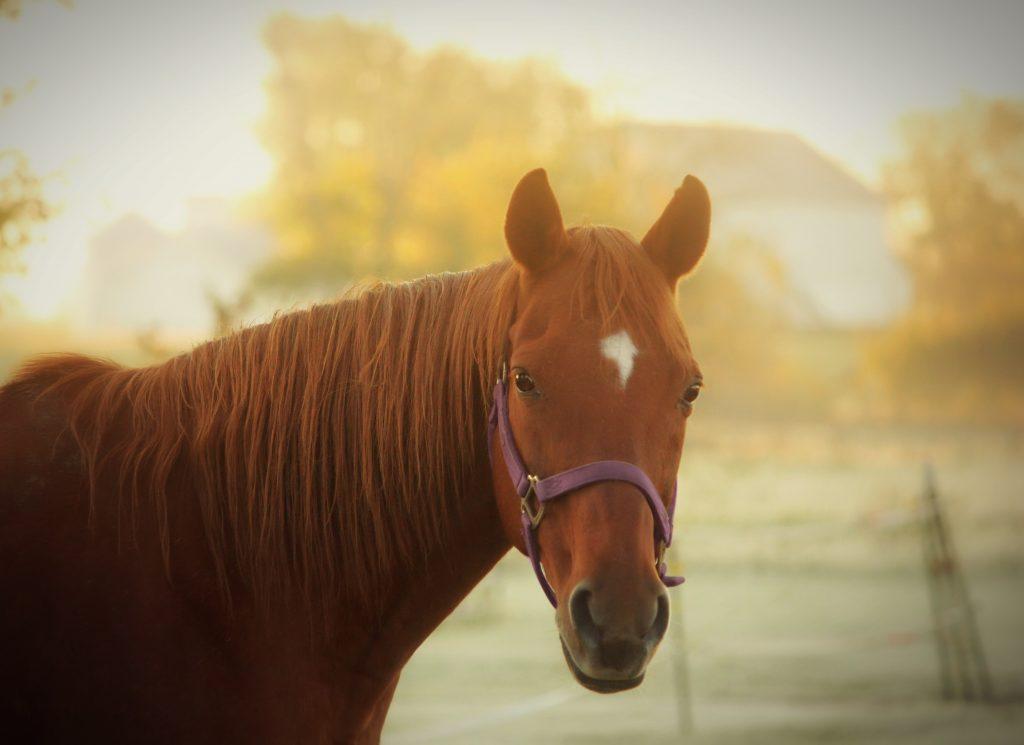 プラセンタエキスイメージ馬